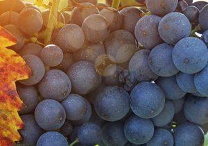 Vinos de Aragón