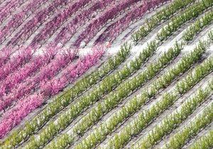 Floración en Cieza. / Autor: Fernando Cobarro. / Cedida por: Turismo de Cieza