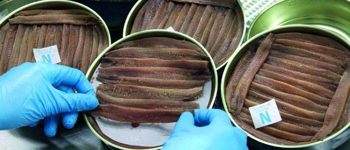 Preparación de conservas de anchoa en Santoña