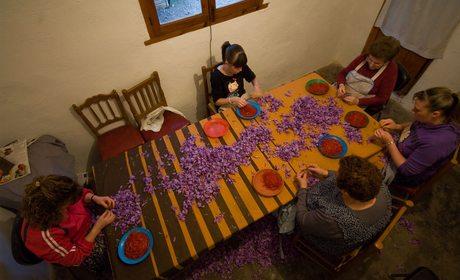 Azafrán de La Mancha, buscadores del oro rojo | Guía Repsol