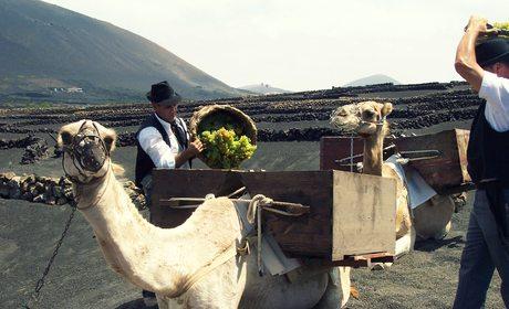 Vinos de Canarias y Baleares | Guía Repsol