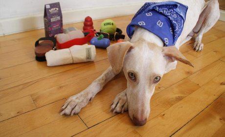 ¿Cómo viajar con perro? | Guía Repsol