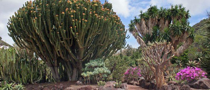 Jardín Botánico Viera y Clavijo.
