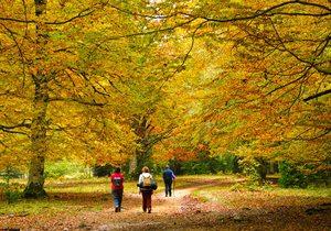 Bosques con encanto en España para ir en otoño   Guía Repsol