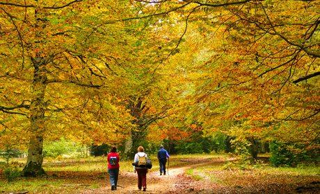 Bosques con encanto en España para ir en otoño | Guía Repsol