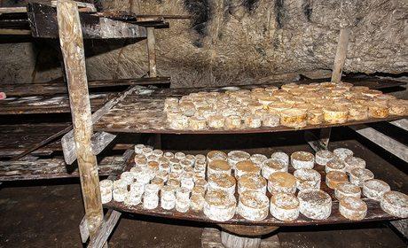 Quesos de Cantabria: Picón Bejes-Tresviso | Guía Repsol