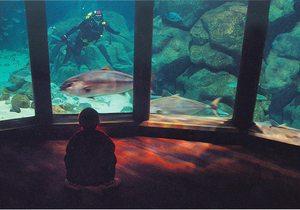 Aquarium Finesterrae