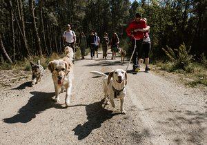 Viajar con perro a la Ribeira Sacra, Galicia | Guía Repsol