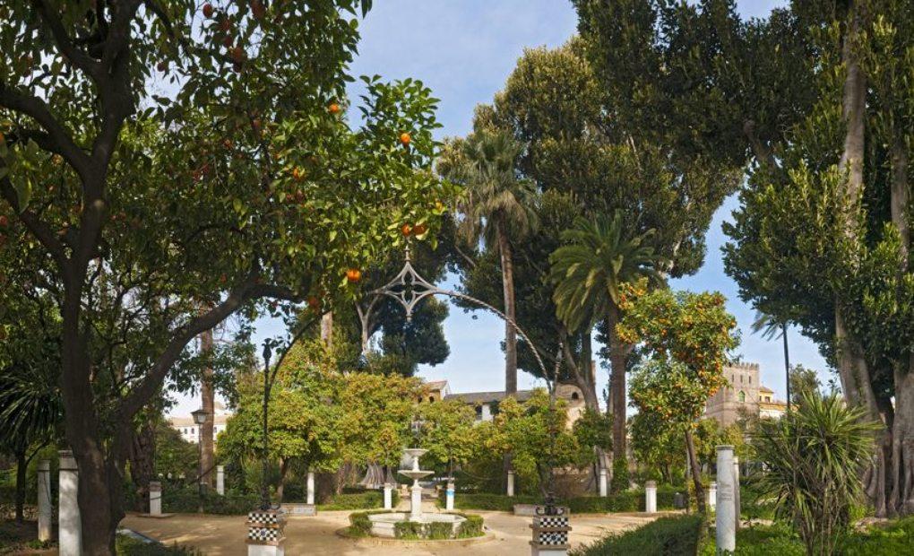 Flora australiana en jardines de murillo vuelta al mundo por sevilla en gu a repsol - Jardines de sevilla ...
