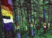 El Bosque Pintado