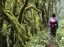 Excursionista en el Parque Nacional de Garajonay