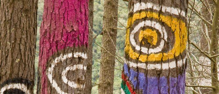 Bosque Oma pintado por Ibarrola