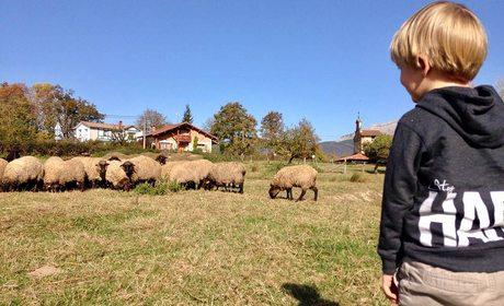 Ocio con niños en Euskadi: pastor por un día | Guía Repsol