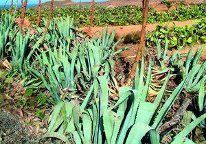 Pitas en el Parque Natural Cabo de Gata-Níjar