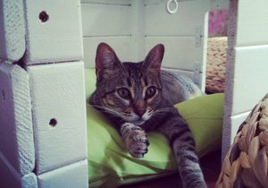 cafe con gatos