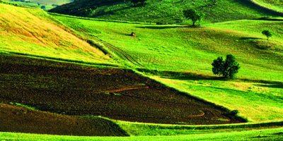 Campos de cultivo y pastoreo en Monesterio